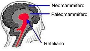 cervello rettiliano, neomammifero, paleomammifero, neocorteccia