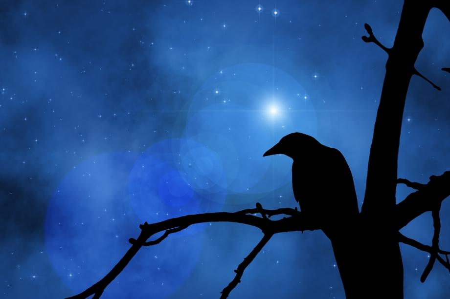 Crow, shadow, fullmoon, stars, corvo, luna piena, stelle, ombra