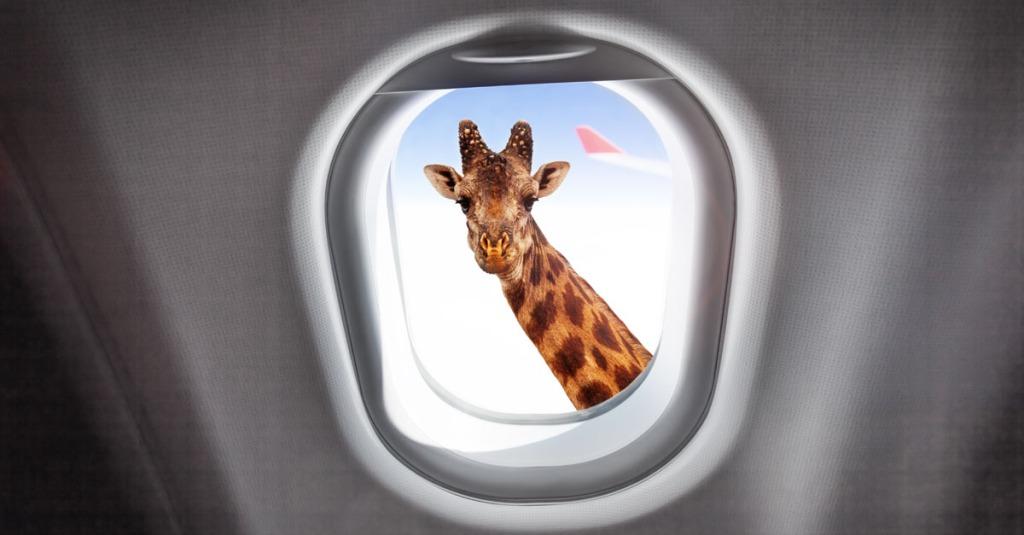 immagine surreale di una giraffa che guarda dentro l'oblò di un aereo