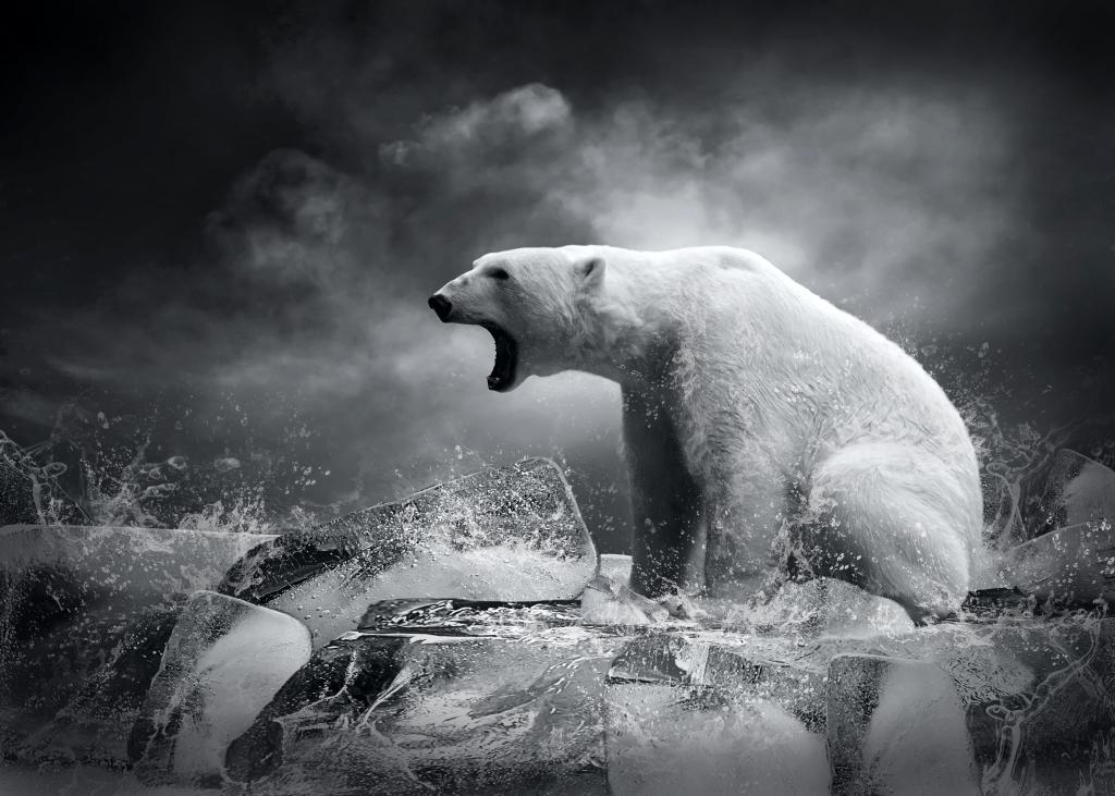 bramire di un'orso polare sul ghiaccio