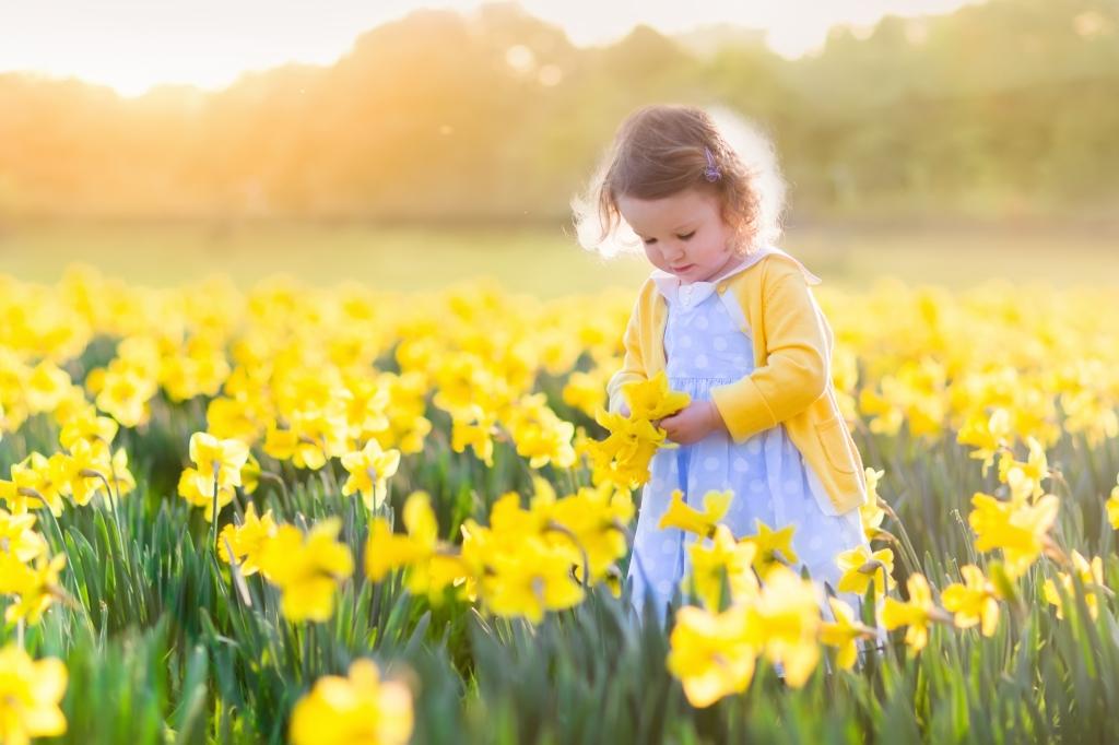 bambina innocente che sta raccogliendo fiori in un prato pieno di fiori gialli