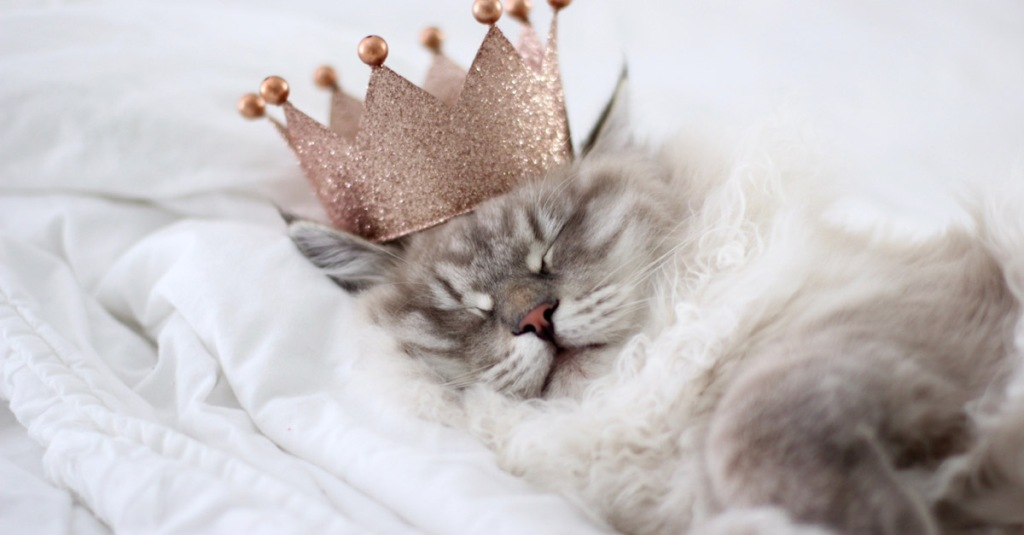 a cat sleeping with the royal crown